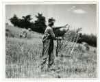 Farmer threshing in a field in Greene County