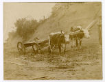 Oxen pulling a wagon