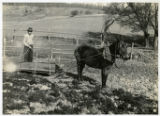 Alvin C. York story -- a farmer and mule plowing a field