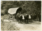 Alvin C. York story -- oxen-driven wagon