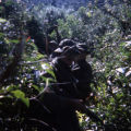 Soldiers on patrol in heavily forested area near Vung Chua Mountain