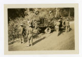 African American CCC recruits thinning trees along a freeway