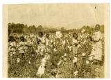 Photograph of African American children in cotton field