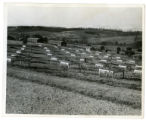 Chicken pens and Civilian Conservation Corps camp at the Buffalo Springs game farm