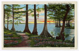 Reelfoot Lake, near Dyersburg, Tenn.