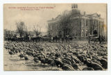 Sixteen Hundred Turkeys on Public Square, Fayetteville, Tenn.