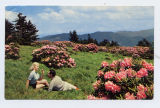 Roan Mountain Rhododendron Gardens on Top of Roan Mountain, N.C.- Tenn.