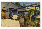 Cotton Ginning Time in Memphis, Tenn.
